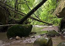 Wald Fliessgewässer